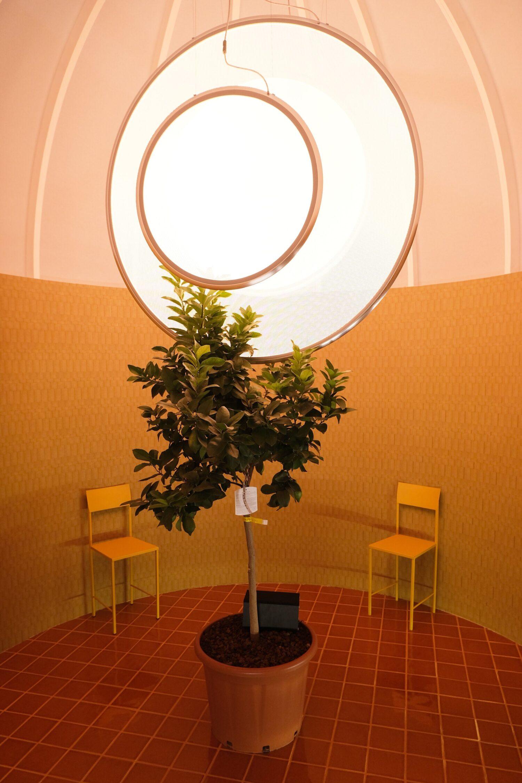 """Healing Gardens"" Pavilion opens at Cersaie"